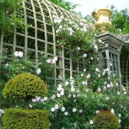 Treillage-at-Versailles